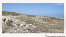 South Africa West Coast - Drive from Houthoop through the Namaqua and Skilpad National Park towards Cape Town.027