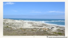South Africa West Coast - Drive from Houthoop through the Namaqua and Skilpad National Park towards Cape Town.029