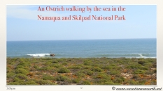 South Africa West Coast - Drive from Houthoop through the Namaqua and Skilpad National Park towards Cape Town.037