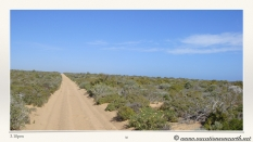 South Africa West Coast - Drive from Houthoop through the Namaqua and Skilpad National Park towards Cape Town.038