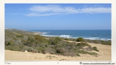 South Africa West Coast - Drive from Houthoop through the Namaqua and Skilpad National Park towards Cape Town.039