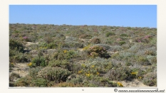 South Africa West Coast - Drive from Houthoop through the Namaqua and Skilpad National Park towards Cape Town.050