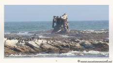 South Africa West Coast - Drive from Houthoop through the Namaqua and Skilpad National Park towards Cape Town.055