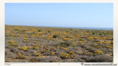 South Africa West Coast - Drive from Houthoop through the Namaqua and Skilpad National Park towards Cape Town.056
