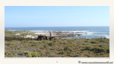 South Africa West Coast - Drive from Houthoop through the Namaqua and Skilpad National Park towards Cape Town.058