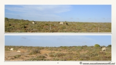 South Africa West Coast - Drive from Houthoop through the Namaqua and Skilpad National Park towards Cape Town.065