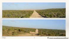South Africa West Coast - Drive from Houthoop through the Namaqua and Skilpad National Park towards Cape Town.069