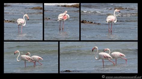 Day 4 - Swakopmund, Skeleton Coast, Bucks Camp in Henties - Namibia 2013 - 23 Sep.012