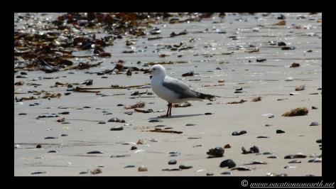 Day 4 - Swakopmund, Skeleton Coast, Bucks Camp in Henties - Namibia 2013 - 23 Sep.014