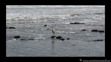 Day 4 - Swakopmund, Skeleton Coast, Bucks Camp in Henties - Namibia 2013 - 23 Sep.035