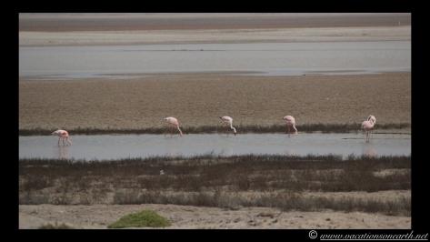 Day 5 - Skeleton Coast, north of Henties - Namibia 2013 - 24 Sep.036