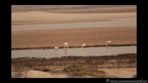 Day 5 - Skeleton Coast, north of Henties - Namibia 2013 - 24 Sep.037