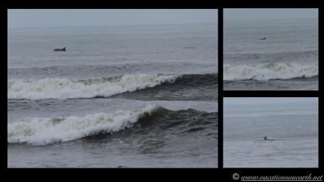 Day 6 - Skeleton Coast - 25 Sep 2013.003