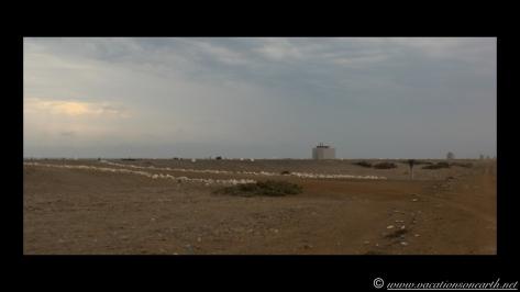 Day 6 - Skeleton Coast - 25 Sep 2013.015