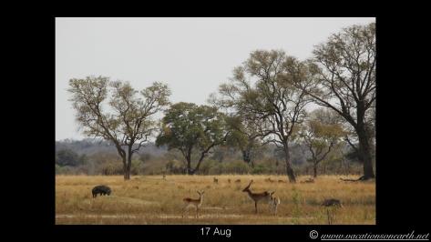 Namibia 2013 - Nambwa 17 Aug.001