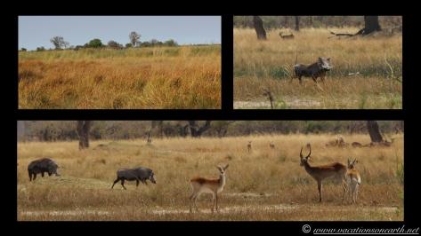Namibia 2013 - Nambwa 17 Aug.002
