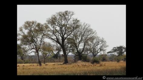 Namibia 2013 - Nambwa 17 Aug.003