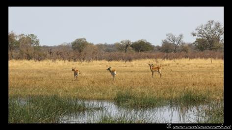 Namibia 2013 - Nambwa 17 Aug.004