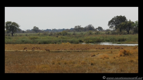 Namibia 2013 - Nambwa 17 Aug.007