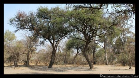 Namibia 2013 - Nambwa 17 Aug.010