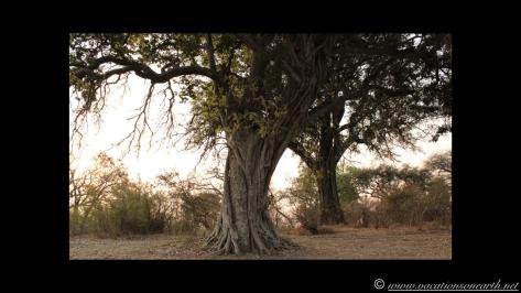 Namibia 2013 - Nambwa 17 Aug.017