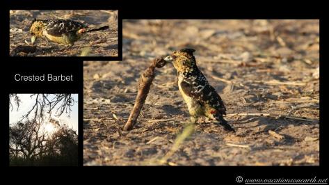 Namibia 2013 - Nambwa Campsite, 16 Aug.007
