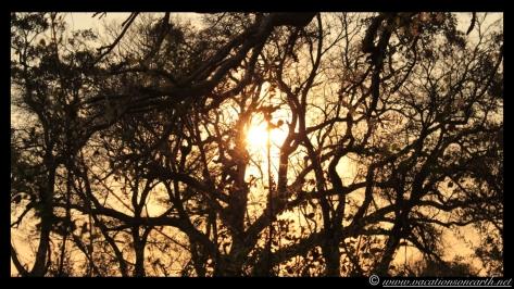 Namibia 2013 - Nambwa Campsite, 16 Aug.010