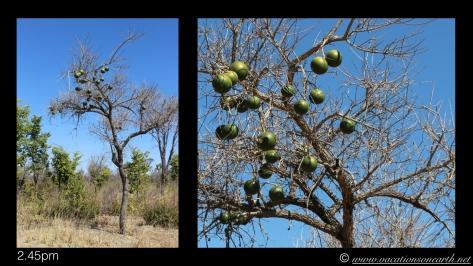 Namibia 2013 - Road trip from Nambwa Camp to Samsitu Riverside Camp, Rundu, 18 Aug.007