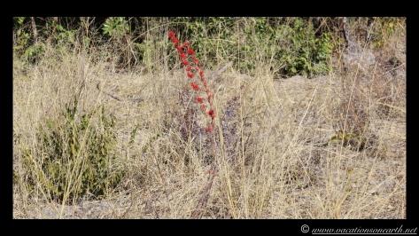 Namibia 2013 - Road trip from Nambwa Camp to Samsitu Riverside Camp, Rundu, 18 Aug.008