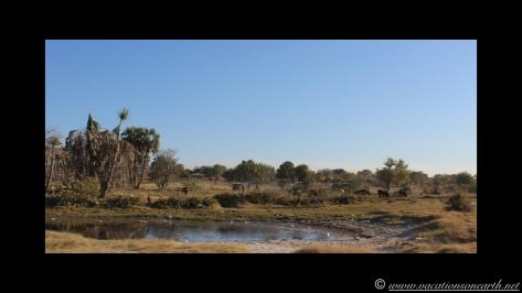 Namibia 2013 - Road trip from Nambwa Camp to Samsitu Riverside Camp, Rundu, 18 Aug.035