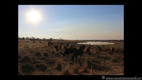 Namibia 2013 - Road trip from Nambwa Camp to Samsitu Riverside Camp, Rundu, 18 Aug.045