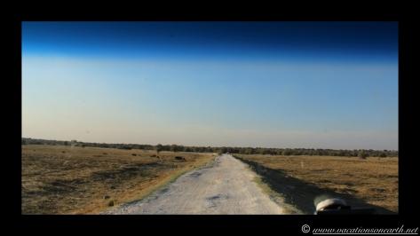 Namibia 2013 - Road trip from Nambwa Camp to Samsitu Riverside Camp, Rundu, 18 Aug.047
