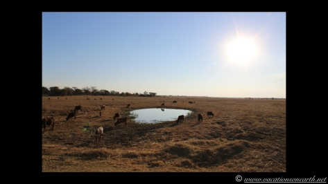 Namibia 2013 - Road trip from Nambwa Camp to Samsitu Riverside Camp, Rundu, 18 Aug.048