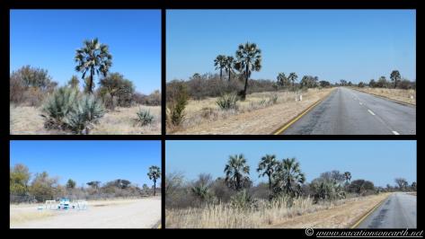 Namibia 2013 - Road trip from Simsitu Riverside Camp, Rundu to Hoba Meteorite, Grootfontein.008