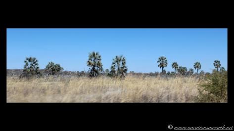 Namibia 2013 - Road trip from Simsitu Riverside Camp, Rundu to Hoba Meteorite, Grootfontein.010