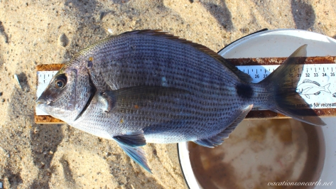 Fishing in Namibia 2016.018