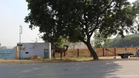 New Delhi to Agra drive.012