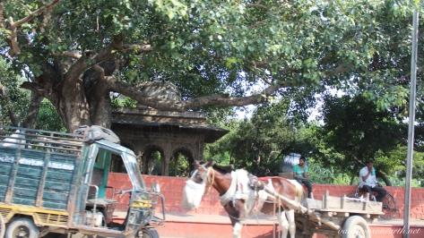 New Delhi to Agra drive.023