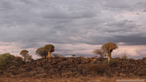 Quivertree Forest Rest Camp, Keetmanshoop, Karas, Namibia, Dec 2015.006