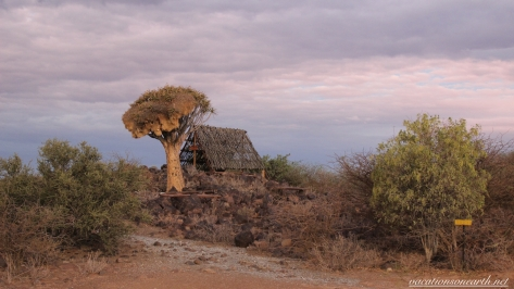 Quivertree Forest Rest Camp, Keetmanshoop, Karas, Namibia, Dec 2015.008