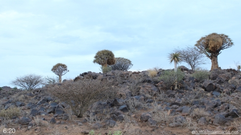 Quivertree Forest Rest Camp, Keetmanshoop, Karas, Namibia, Dec 2015.015